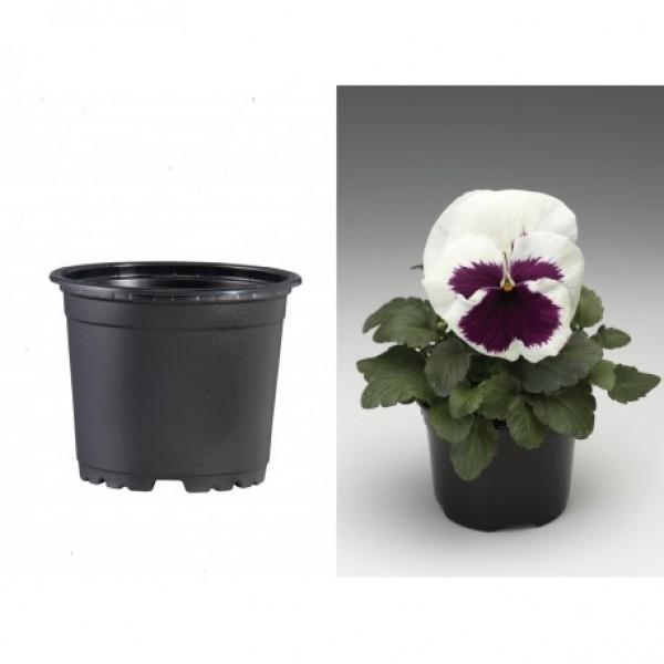 Pots VCG 10.5cm Black