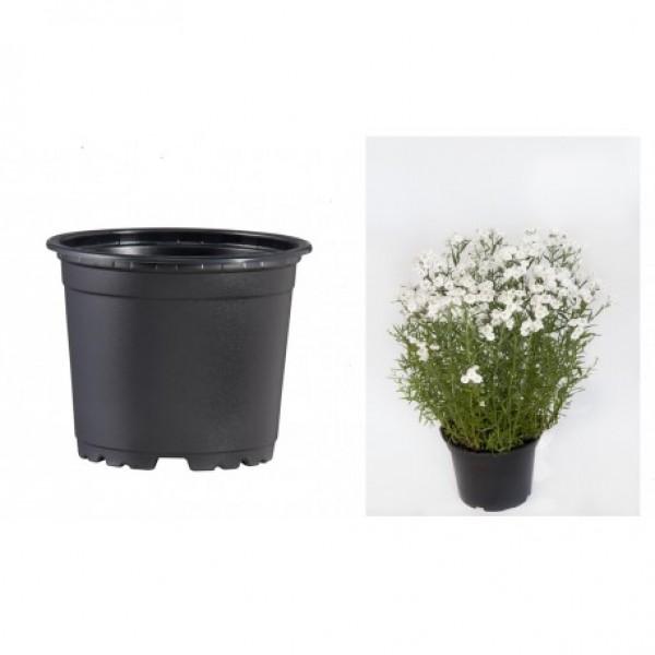 Pots VCG 12cm Black