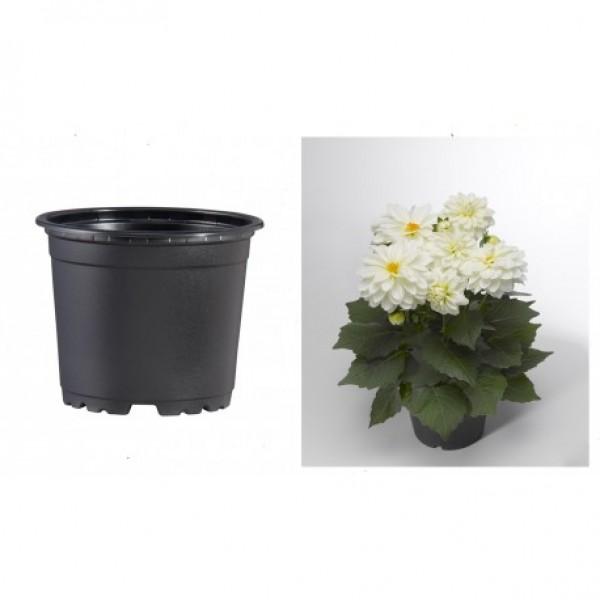 Pots VCG 15cm Black