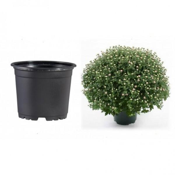 Pots VCG 17cm Black