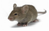 Guide to rodent control