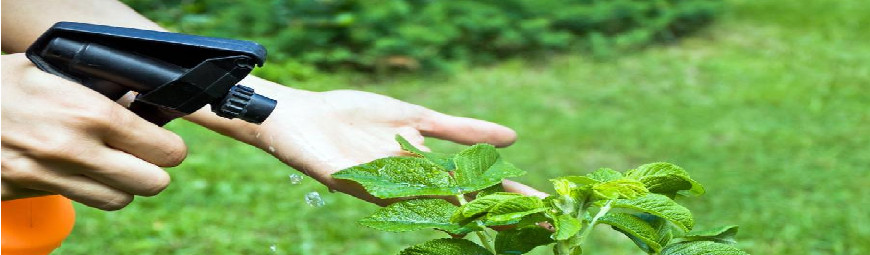 Insecticide plants