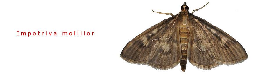 Against moths