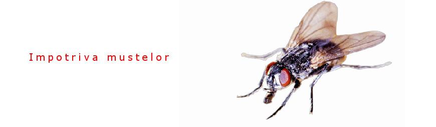 Against flies